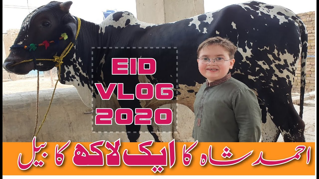 Cute Ahmad shah With His BLACK BULL Eid Azha VLOG 2020