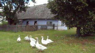 Музей под открытым небом.(2) (показывает жизнь и жилище людей в прошлые века). Бавария.