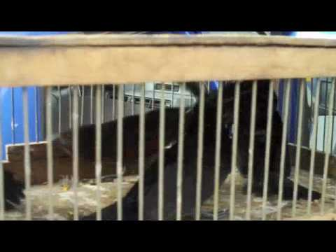 Illegally traded wild animals seizure, Sao Paulo, Brazil, 26 Abril 09