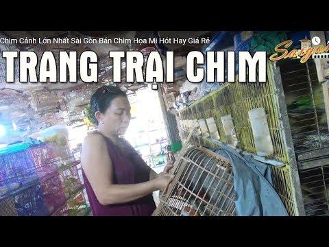 Cửa Hàng Chim Cảnh Lớn Nhất Sài Gòn Bán Chim Họa Mi Hót Hay Giá Rẻ