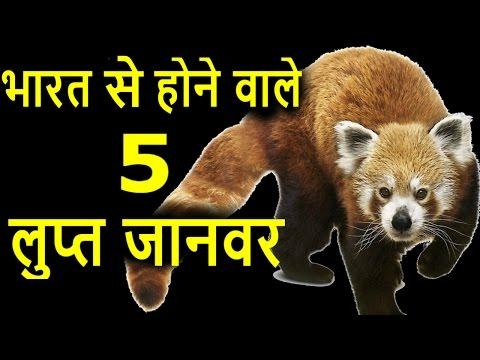 भारत से होने वाले 5 लुप्त जानवर | Top 5 Endangered species of india I lupt janwar I  Indian Animals