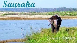 Download Video Sauraha Chitwan MP3 3GP MP4
