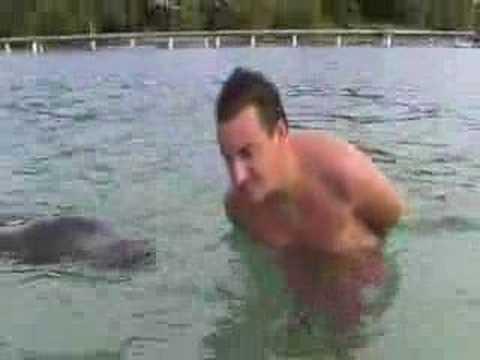 honduras un bagno con i delfini