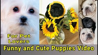 Funny and Cute Puppies Video | Funny & Cute Puppies and Dogs | For Dog Lovers | FUN HOME