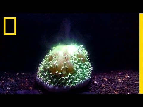 First Ever Footage: Watch Coral Bleaching Happen Before Your Eyes | National Geographic