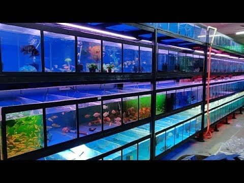 Farhat Fisheries Aquarium Fish Shop
