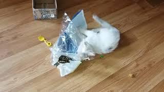 БРОШЕННЫЙ КОТЕНОК #23 АКНЕ У КОШЕК ЛЕЧЕНИЕ | БРОШЕННЫЙ КОТИК  Уличный котенок