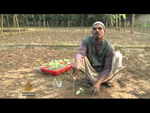 First genetically modified crop created in Bangladesh