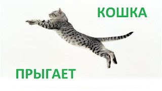 Вот так прыгает кошка