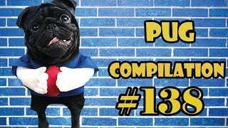 Funny Dogs but only Pug Videos | Pug Compilation 139  InstaPug