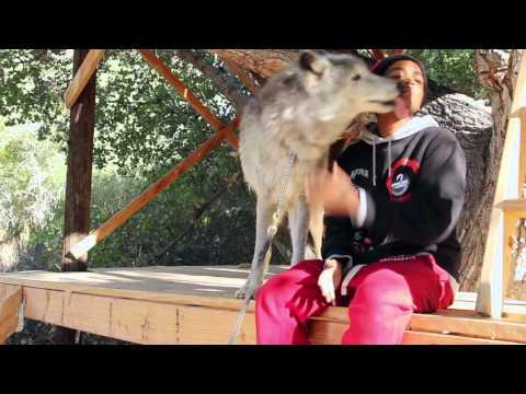 Random Movie Pick - Medicine of the Wolf Trailer YouTube Trailer