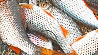 БЕШЕНЫЙ КЛЁВ ПЛОТВЫ НА СПИННИНГ Такую рыбалку даже я не ожидал