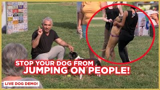 How To Stop Your Dog from Jumping on People w/ Cesar Millan!