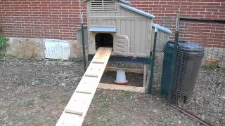 My New Snap-lock Chicken Coop