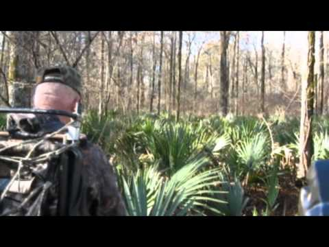 Hog Hunting with bows in the Mississippi Delta