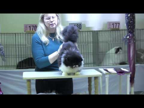 Cat Show San Jose Jan. 2010