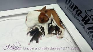 Lincoln & Faith Babies Born 12.11.2016
