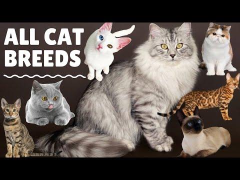 All Cute Cat Breeds List A to Z List