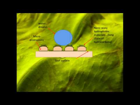 Lotus Effect - Superhydrophobic Surfaces