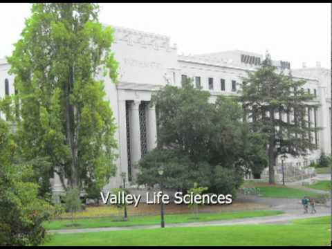 What the UC Berkeley campus really looks like