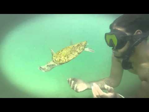 Sun.Salt.Sea.Videography presents Trinidad and Tobago Marine Wild Life