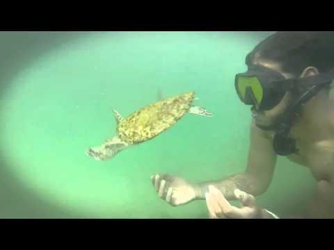 Sun.Salt.Sea.Videography presents Trinidad and Tobago Marine Wild Life