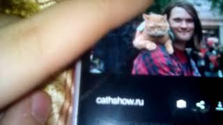 Книга:Уличный кот по имени Боб.Джеймс Боуэн.