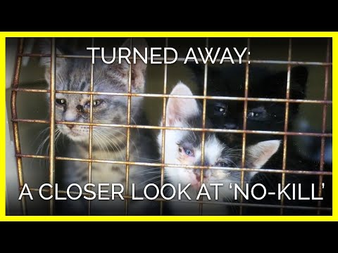 No-Kill' Policies Slowly Killing Animals | PETA