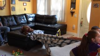 Kids Playing Tug Of War With Their 1 Year Old Rhodesian Ridgeback, Rottweiler, Stafford Terrier Mix