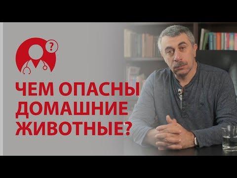Джунгарские хомяки - strana-