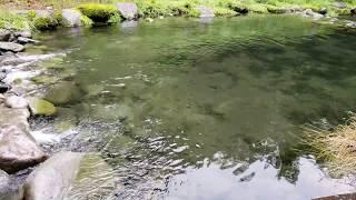 수정 같이 맑고 깨끗한  계류 에 어떤 물고기 잡을수 있을까  ??
