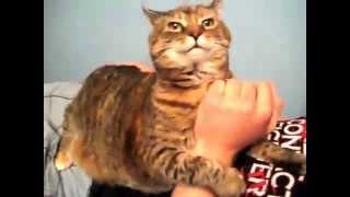 Смешные коты. (Funny cats)