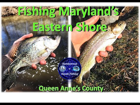 MULTISPECIES FISHING On MARYLAND's Eastern Shore, 11 March 2018