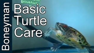 Turtle Care For Beginners: The Basic Enclosure
