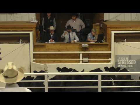 2017 KAA Livestock Auctioneer Championship