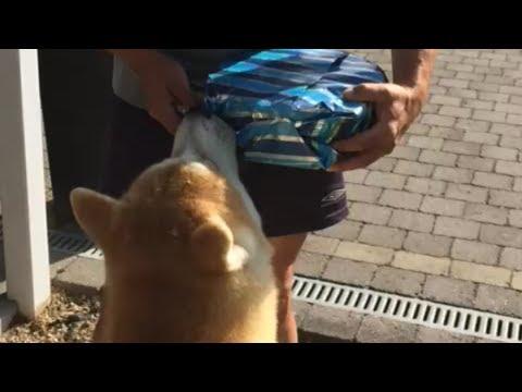 Akita Inu Kaitô - Am I Getting a Present?!
