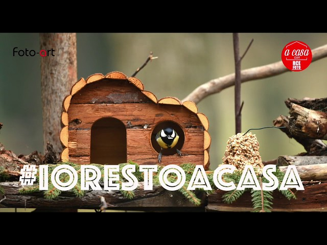 #iorestoacasa - il birdgarden di Foto Art
