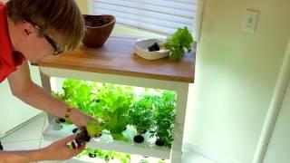 Click & Grow Robot Garden Concept