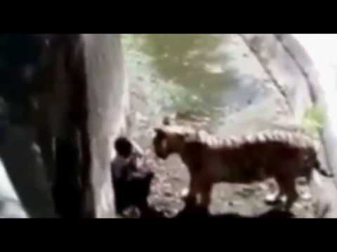 Every Soul Shall Taste Death | Man Killed by Tiger In Zoo | Shaikh Nooruddin Umeri | YAFU | FULL HD