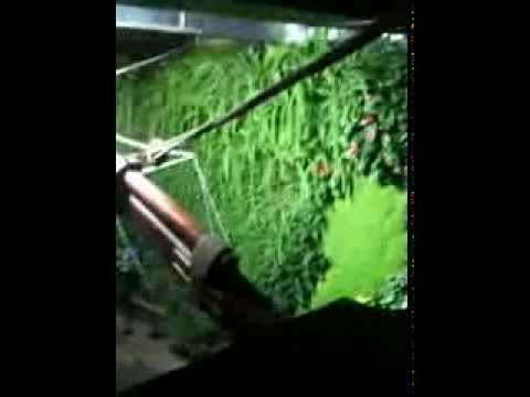 Giardino verticale acquario genova dopo 4 mesi di crescita for Vivai genova