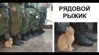 Лютые приколы. Кот в АРМИИ