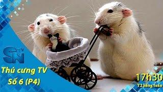 Thú cưng TV - Số 6 (P4) - Có bao nhiêu loại Hamster? | SNTV