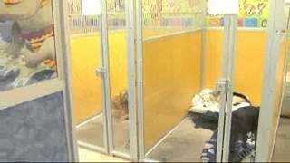 Dog Daycare New York