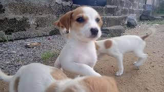 cute dog funny  video   Baby dog funny video