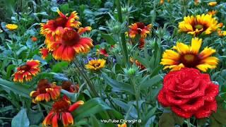 Good Evening Lovely Video