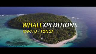 WHALEXPEDITIONS PROMO WEB