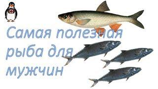 Полезная рыба для мужчин. О ползье морепродуктов.
