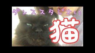 野良猫のりんくんは、 ダンススタジオに飼われてるらしいです。 可愛く...