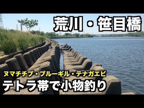 テナガエビを釣るつもりだった 笹目橋 荒川