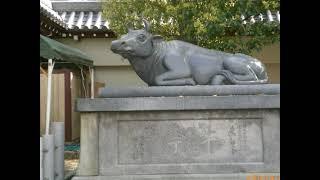 大阪天満宮の創始(御鎮座)は、平安時代中期に遡ります。 菅原道真公は...